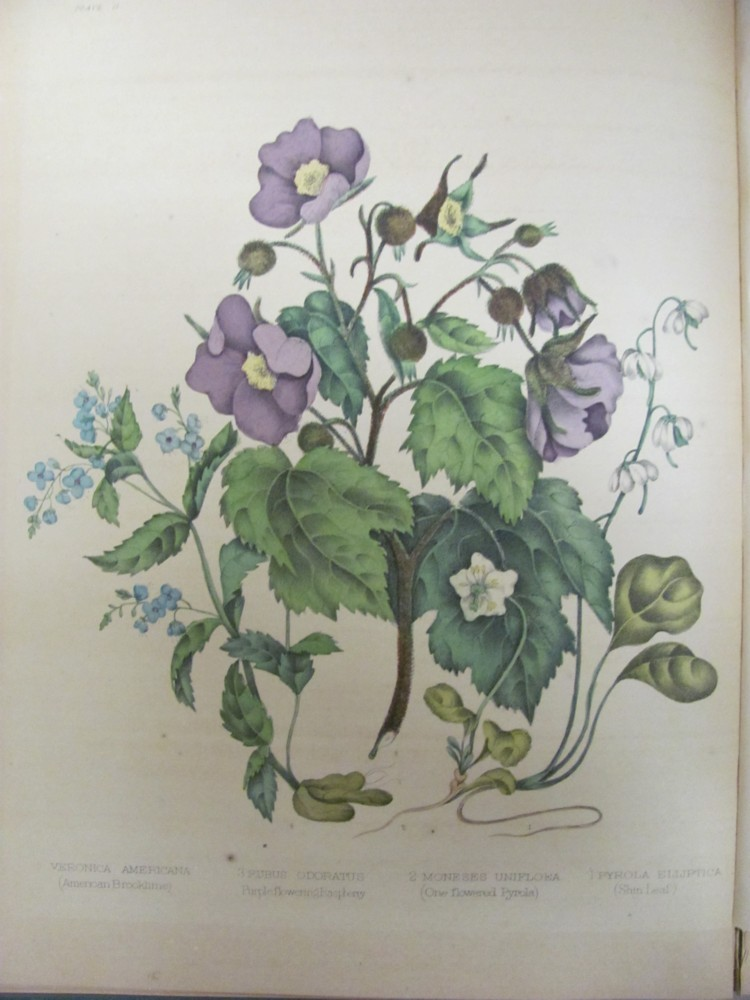 Image for Canadian Wild Flowers
