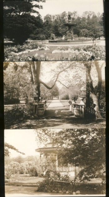 Image for Five black & white photographs of the Publica Gardens, Halifax, Nova Scotia (1910's)
